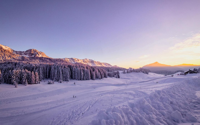 winter-snow-trees-4k-2g.jpg