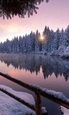 winter-snow-trees-nature-outdoors-ar.jpg