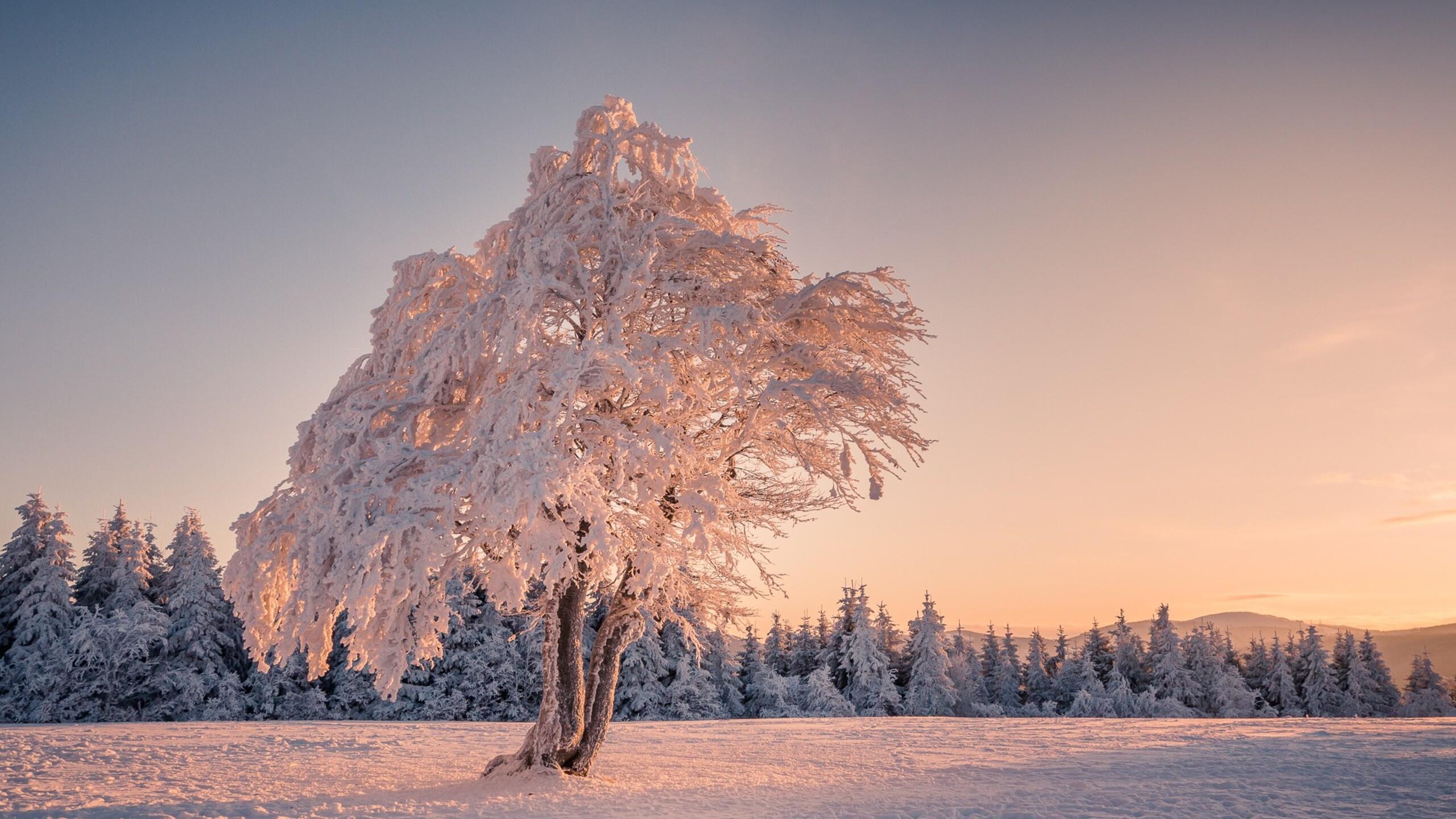 снег зима лучи деревья snow winter rays trees скачать