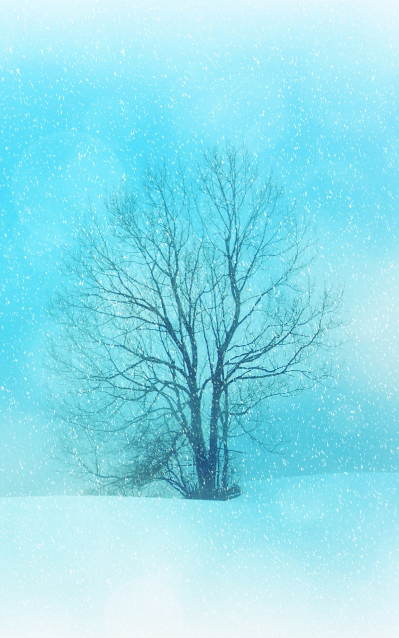 800x1280 winter snowflakes tree 4k nexus 7samsung galaxy tab 10 winter snowflakes tree 4k rkg voltagebd Gallery