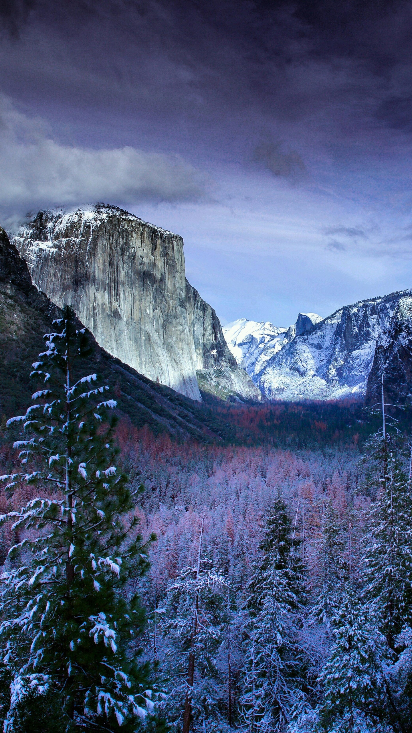 Simple Wallpaper Mountain Google Nexus - winter-trees-mountains-5k-pb-1440x2560  Best Photo Reference_296155.jpg
