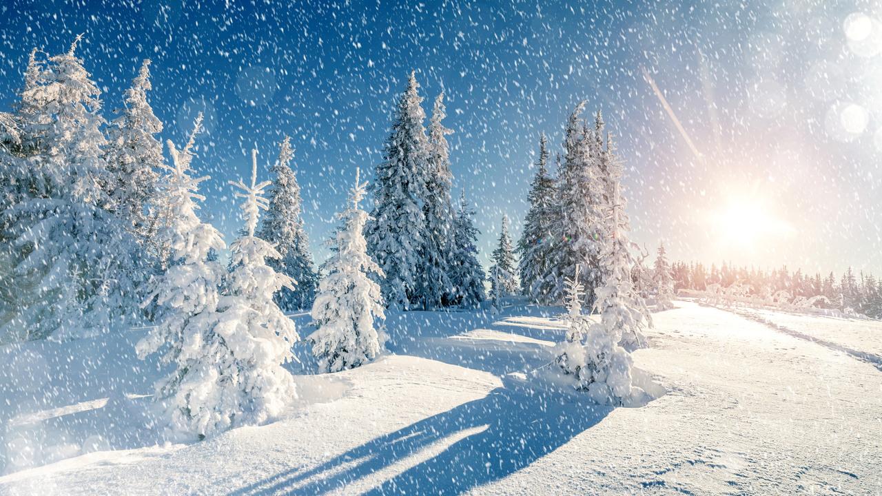 winter-trees-snow-season-5k-65.jpg