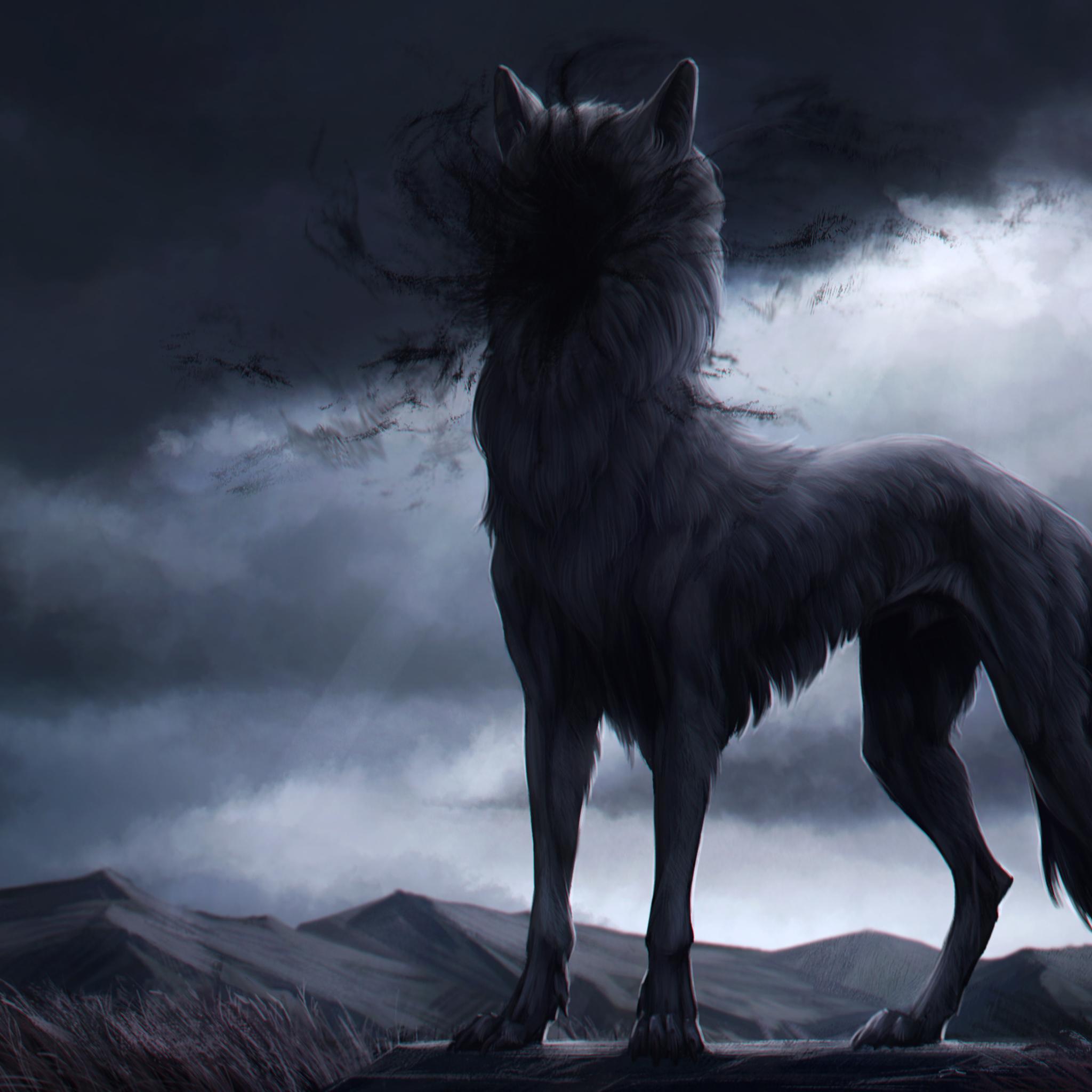 2048x2048 Wolf In Shadow 4k Ipad Air Hd 4k Wallpapers