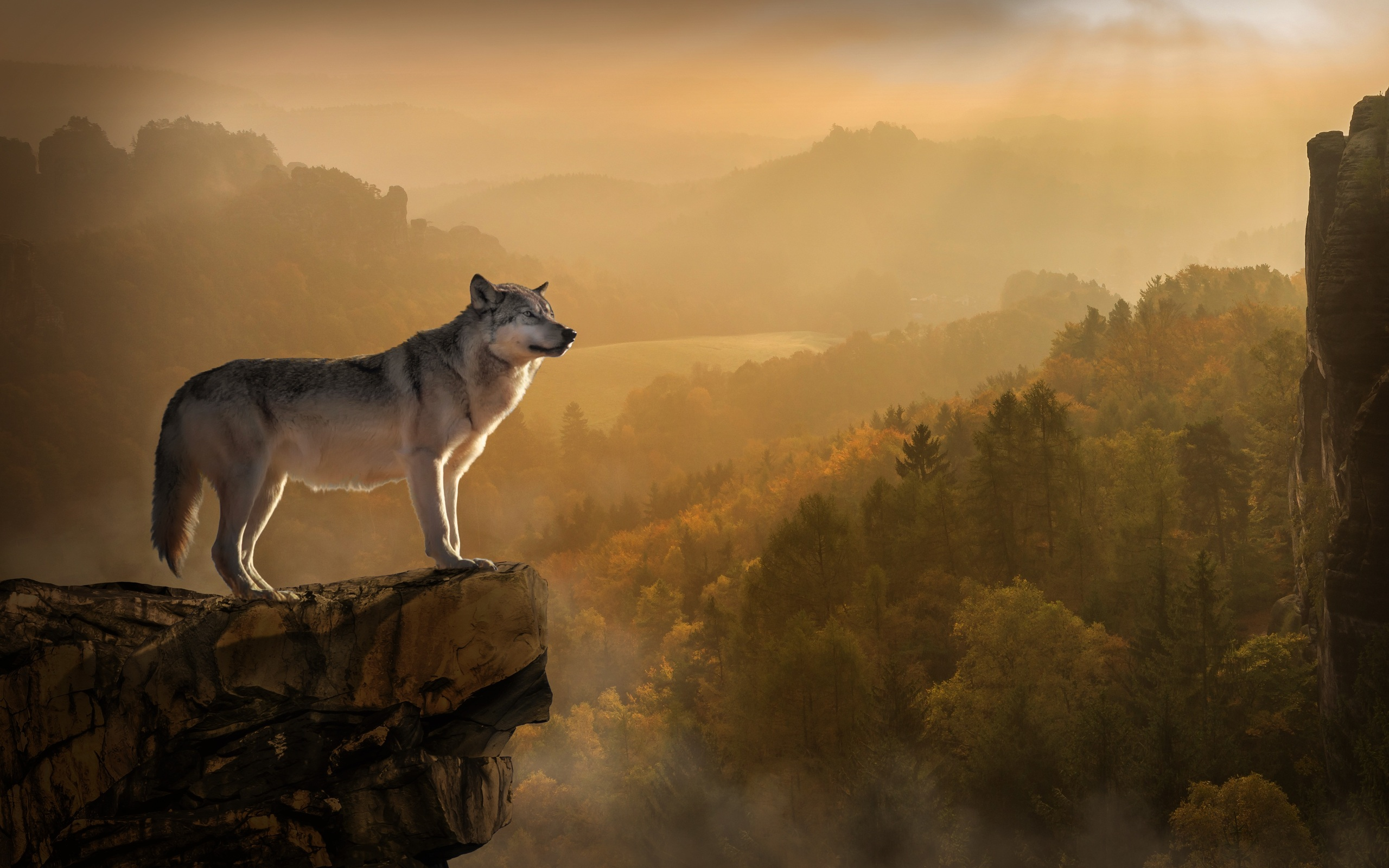 wolf-standing-on-edge-4k-fg.jpg