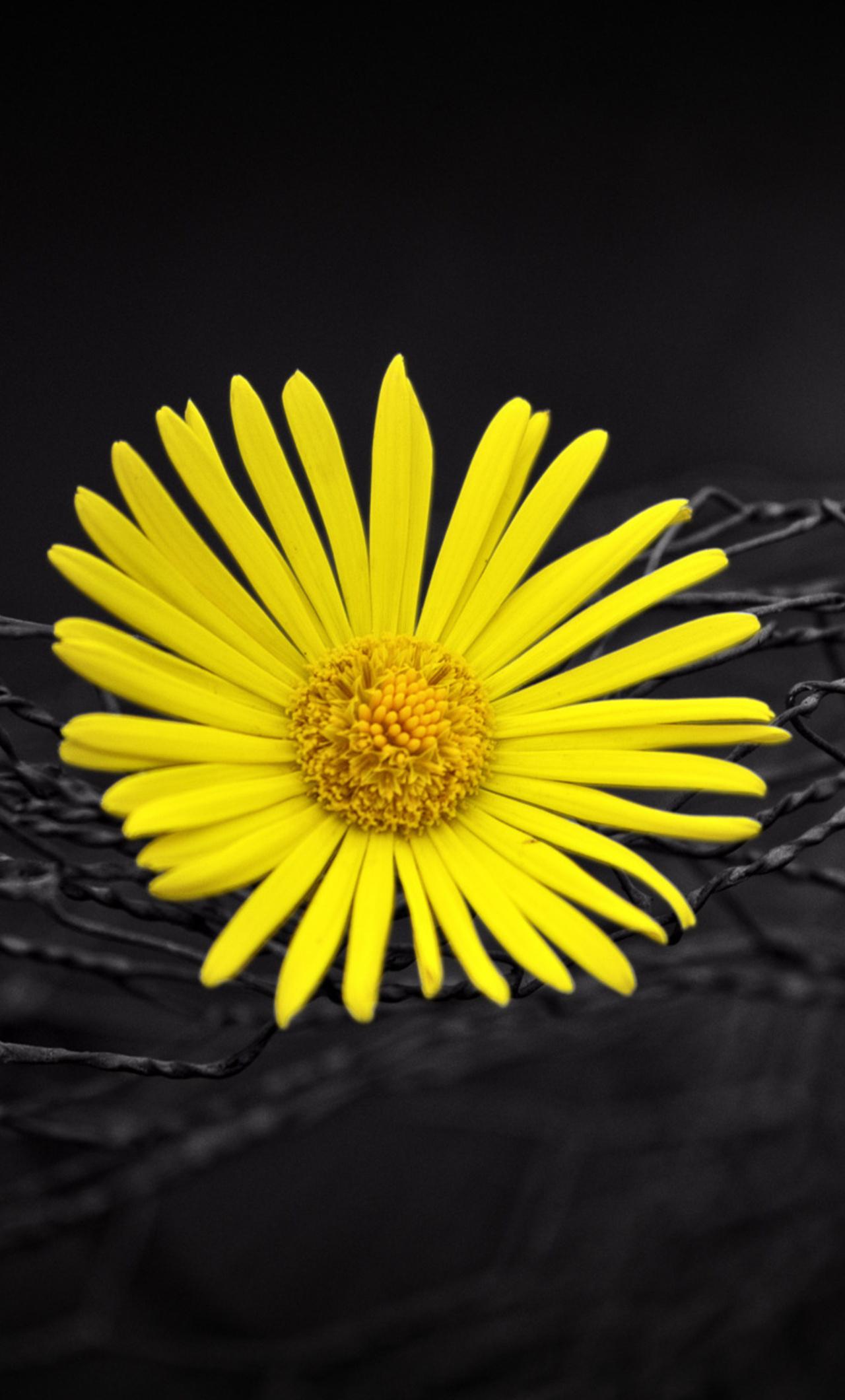 1280x2120 Yellow Flower Fence Dark Black Background Iphone 6