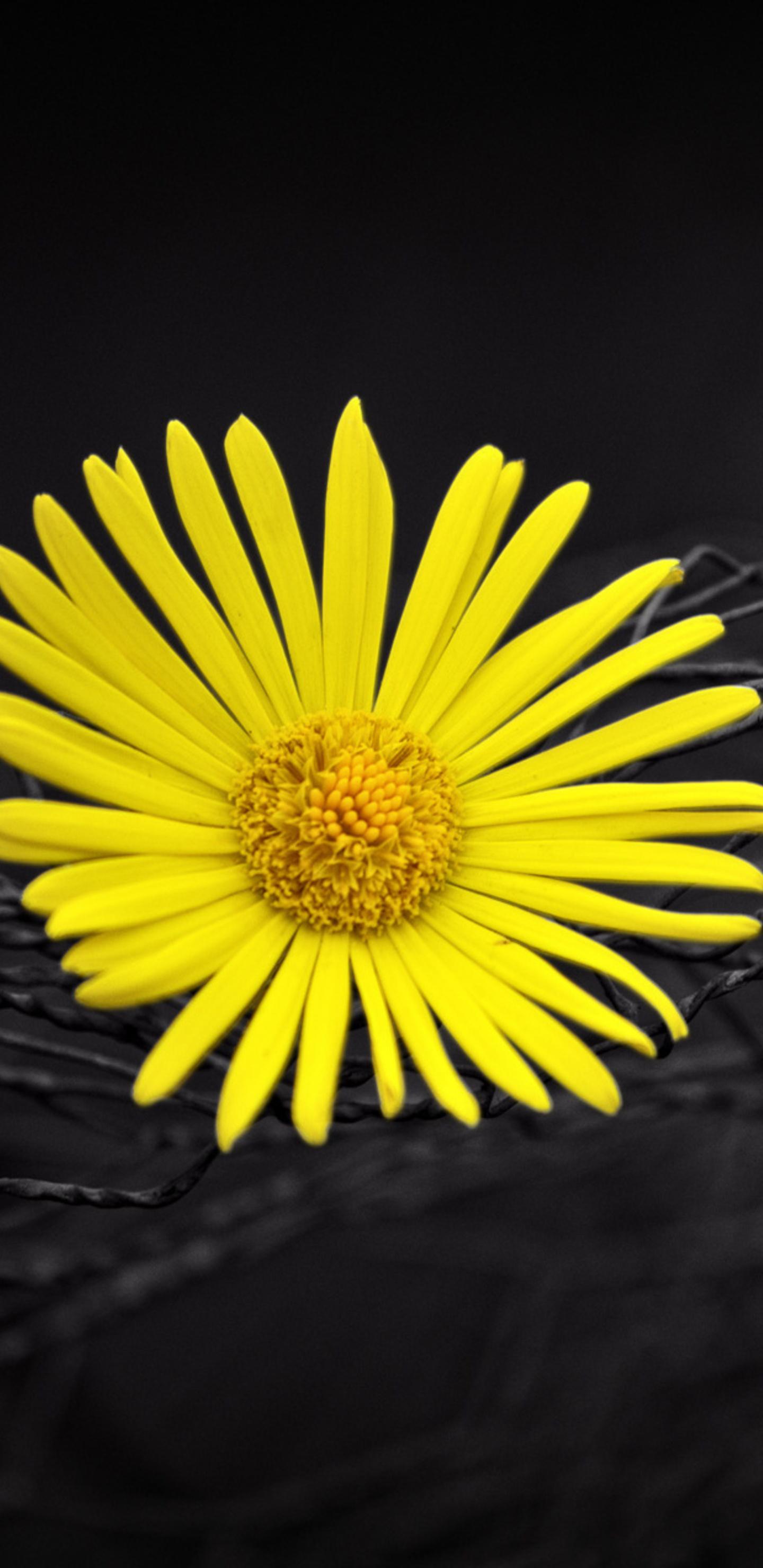 1440x2960 yellow flower fence dark black background samsung galaxy yellow flower fence dark black background exg mightylinksfo