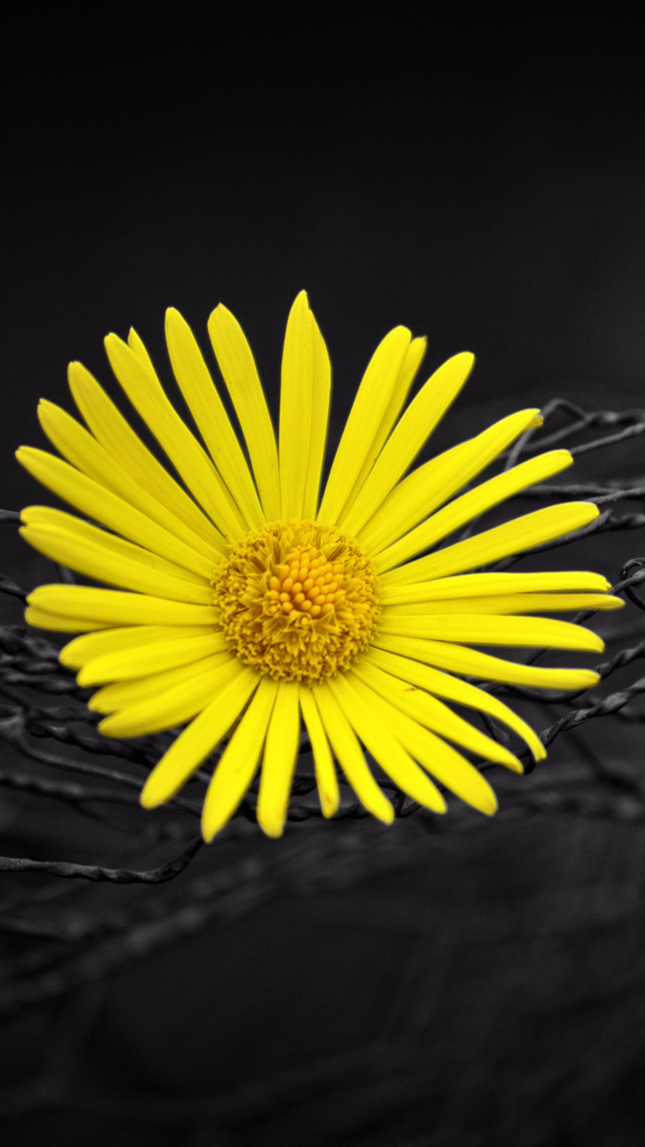 yellow-flower-fence-dark-black-background-ex.jpg