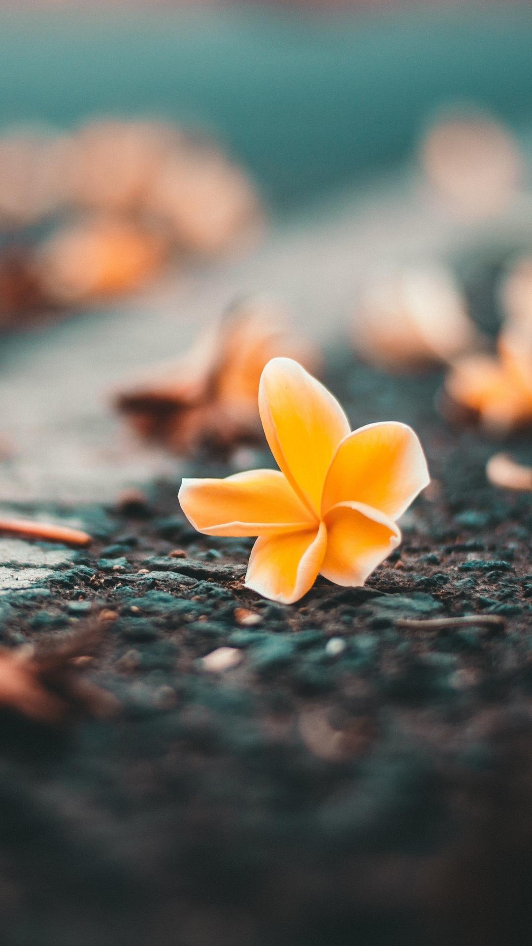 yellow-flower-on-roadside-mn.jpg