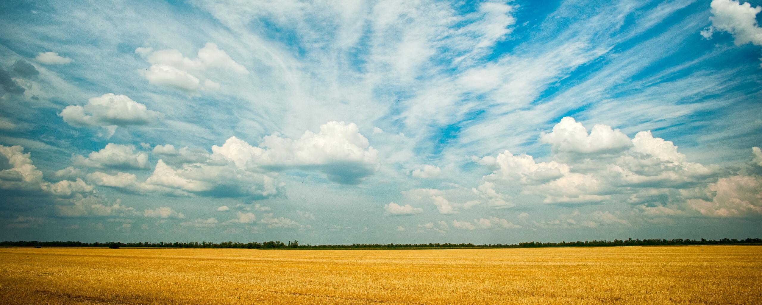 yellow-grass-field-4k-7n.jpg