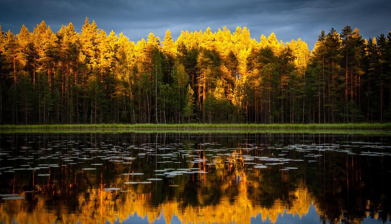 yellow-green-leafaed-trees-4k-ye.jpg