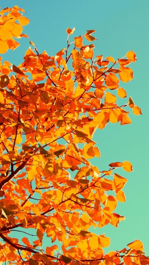 yellow-leaves.jpg