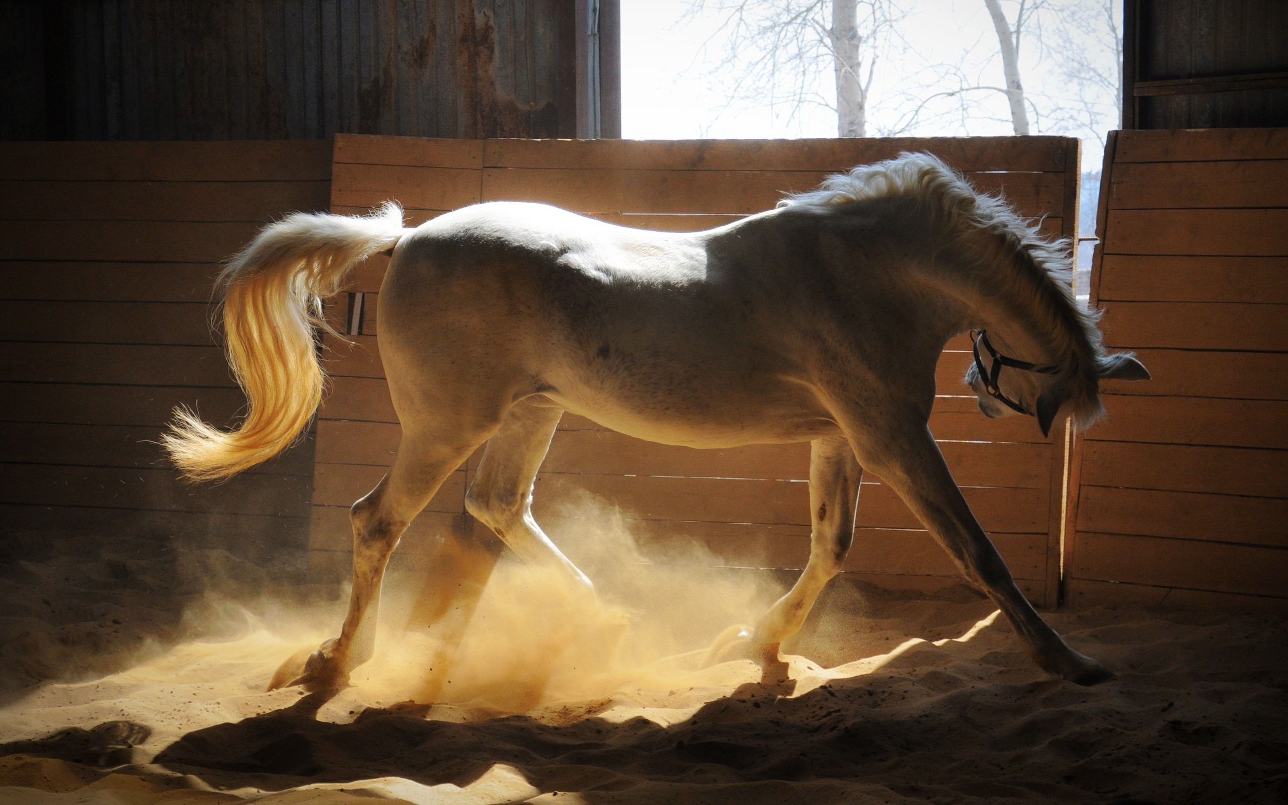 1360x768 Adorable White Horse Laptop Hd Hd 4k Wallpapers Images Backgrounds Photos And Pictures