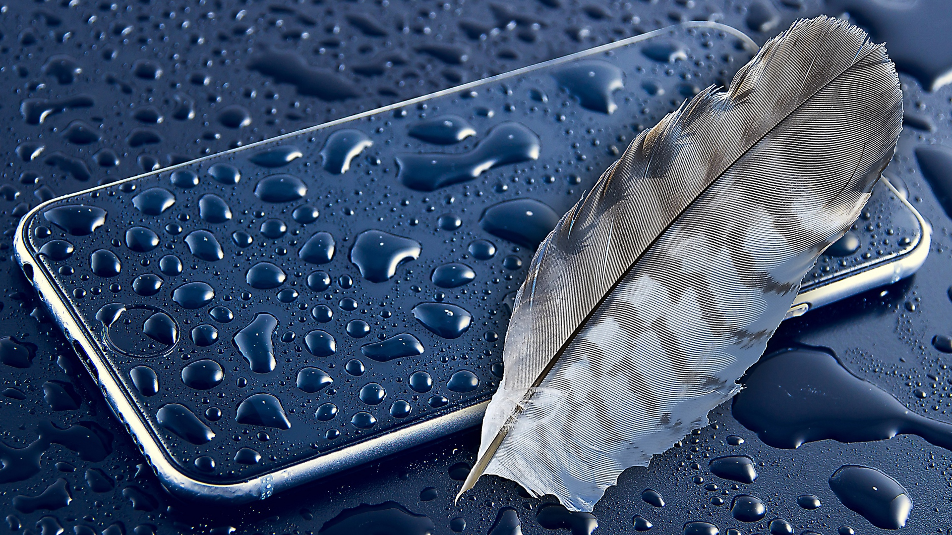 1920x1200 Apple Feather 1080p Resolution Hd 4k Wallpapers