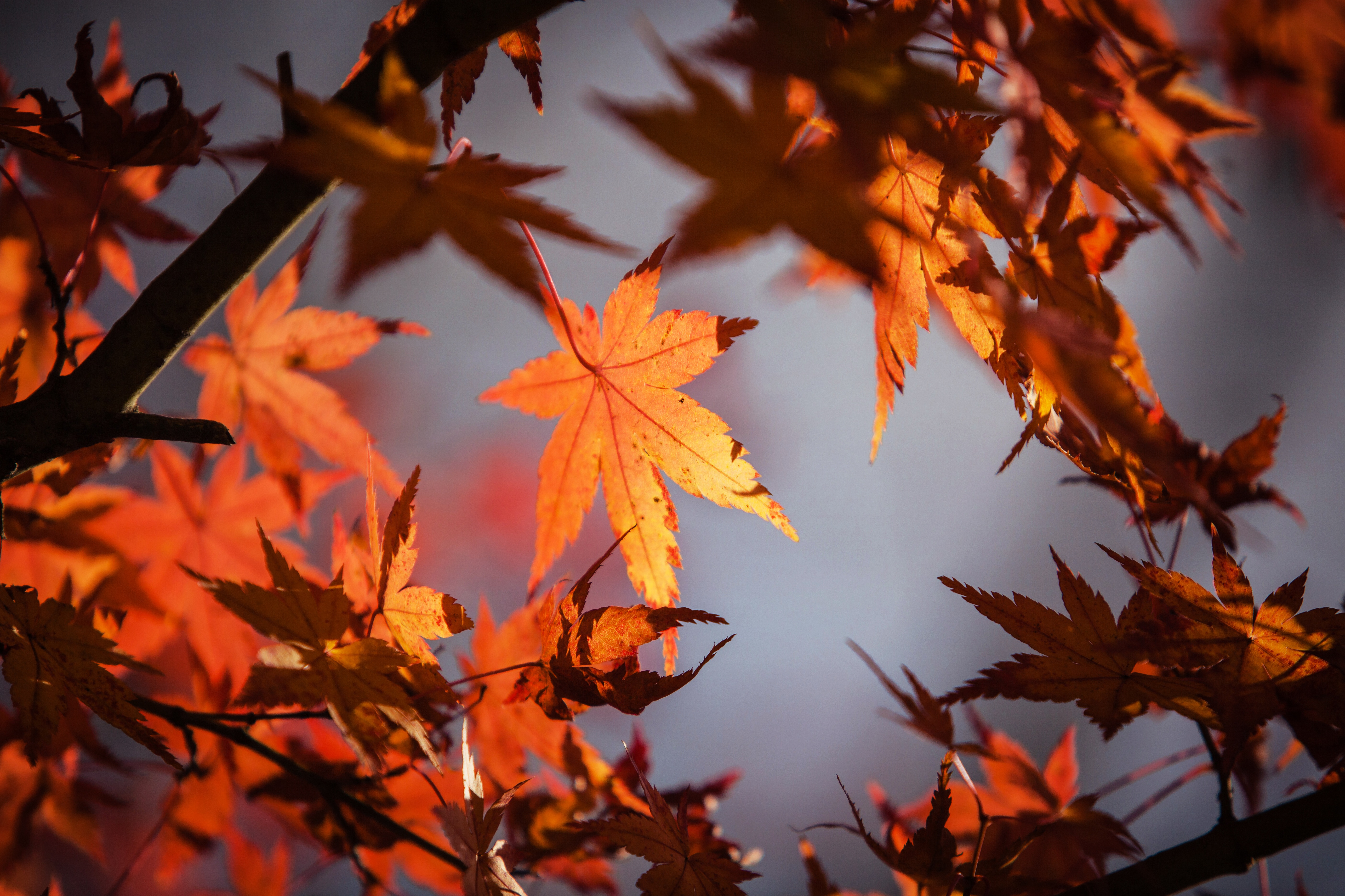 Autumn Leaves 4k 5k Hd Flowers 4k Wallpapers Images Backgrounds Photos And Pictures