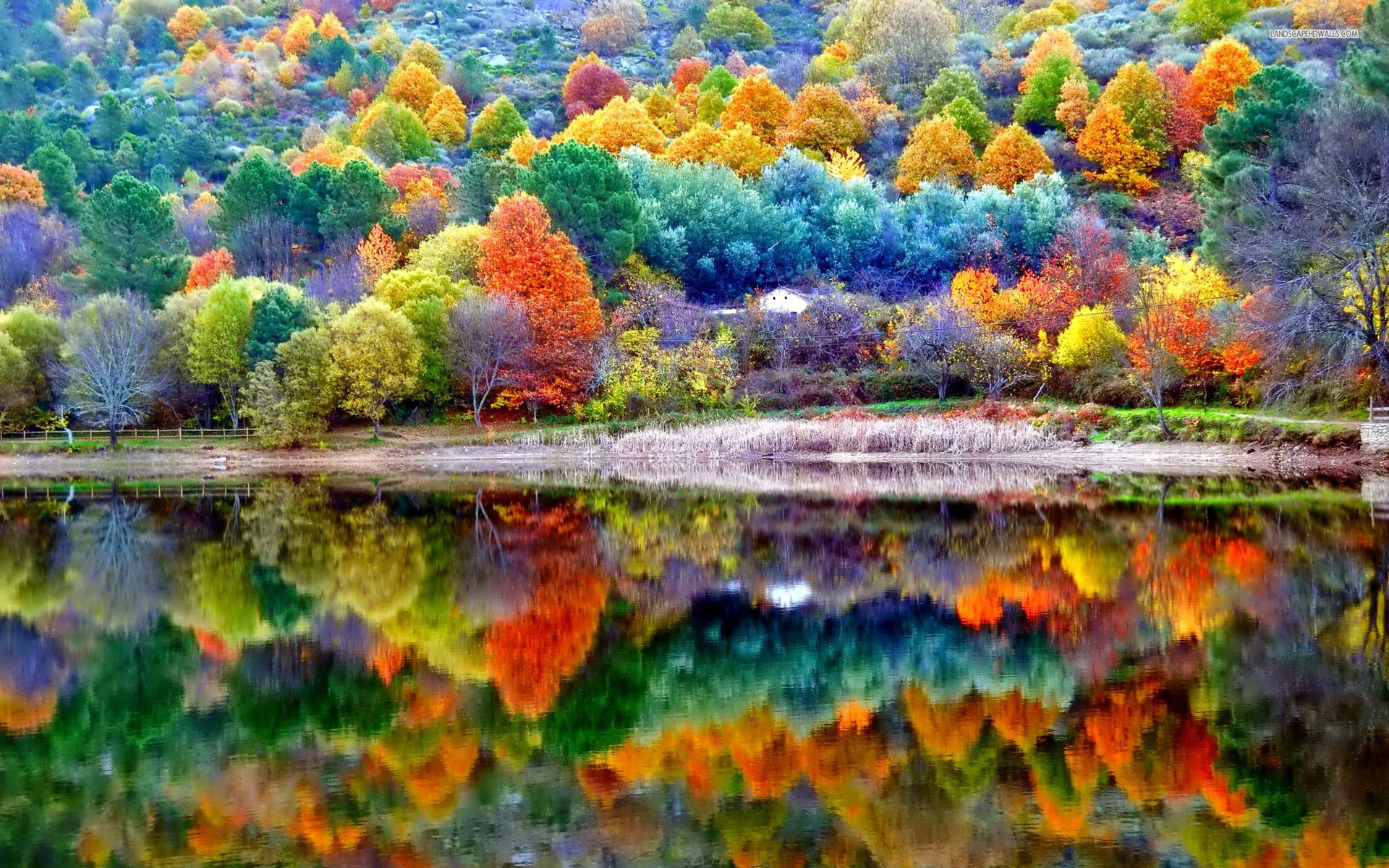 Autumn Scenery Hd Nature 4k Wallpapers Images Backgrounds Photos And Pictures