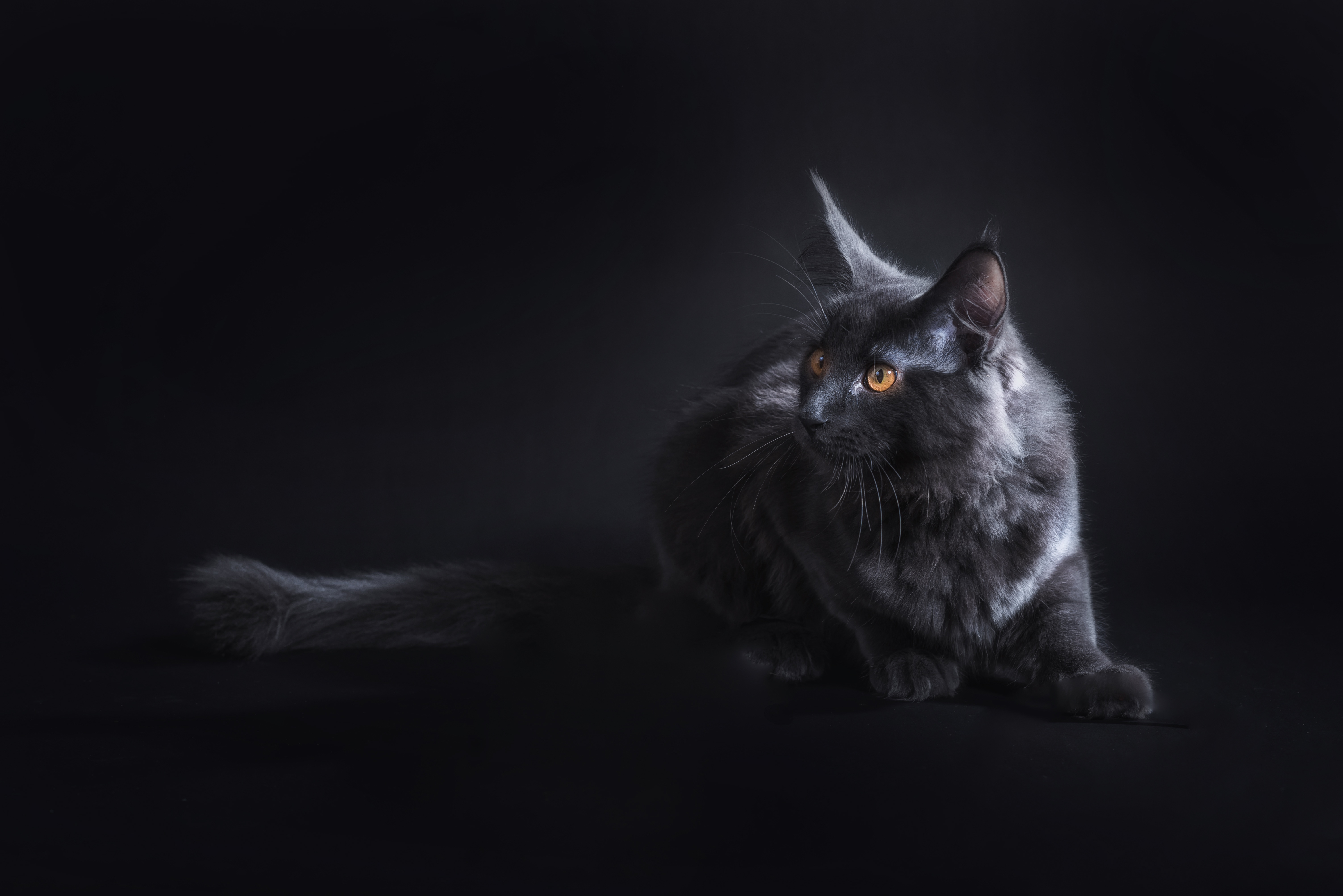 1920x1080 Black Cat 5k Laptop Full Hd 1080p Hd 4k Wallpapers Images Backgrounds Photos And Pictures