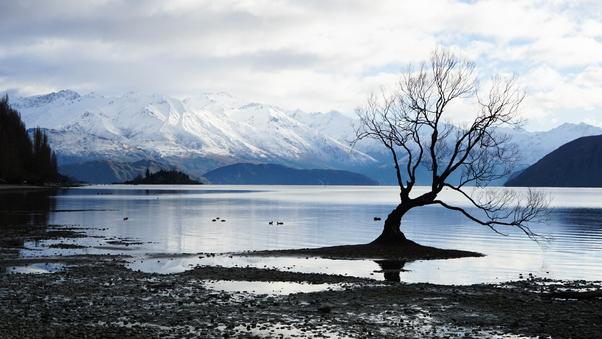 alone-tree-snow-lake-mountain-landscape-5k-w4.jpg
