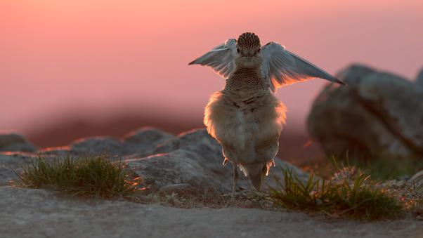 bird-in-joy-ic.jpg