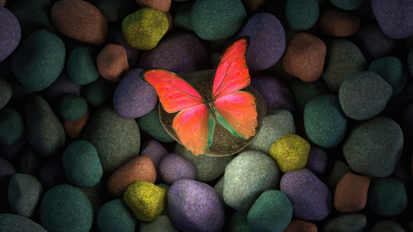 butterfly-on-rocks-4k-s1.jpg
