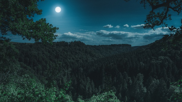 Dark Night Forest View 5k Hd Nature 4k Wallpapers Images