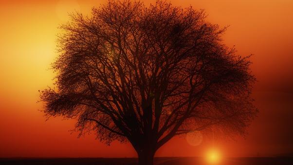 earth-orange-road-silhouette-sun-sunset-tree-zl.jpg
