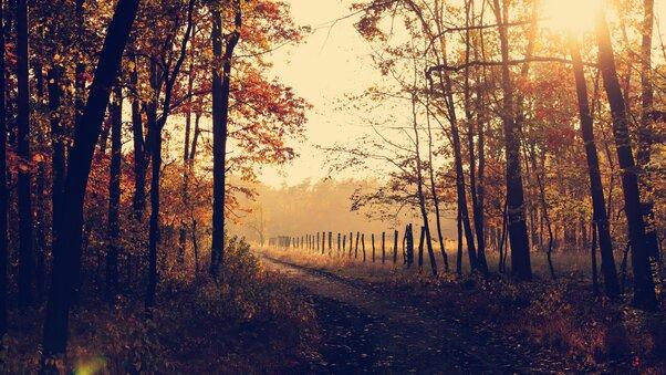 evening-forest-path-sunbeams-h8.jpg
