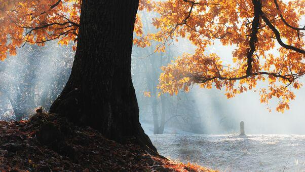 fall-season-tree-5k-sv.jpg