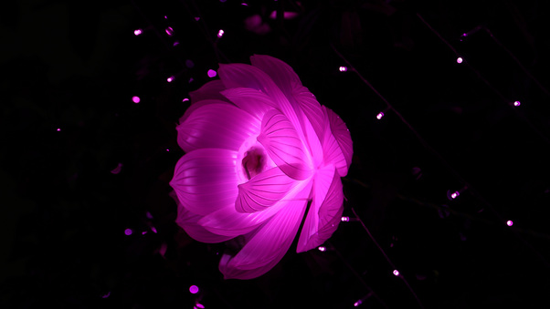 flower-shape-artistic-light-kw.jpg