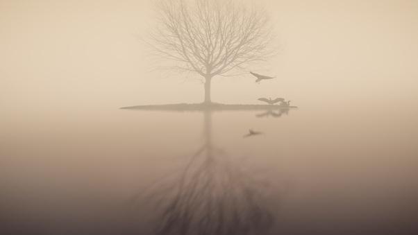 fog-lake-silhouette-tree-birds-yq.jpg