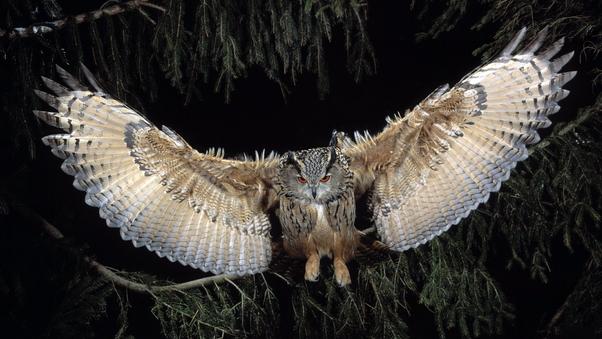 great-horned-owl-to.jpg
