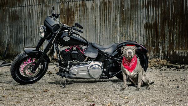 harley-davidson-and-dog-3g.jpg