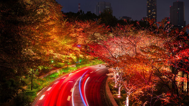 japan-tokyo-roads-autumn-trees-night-q7.jpg