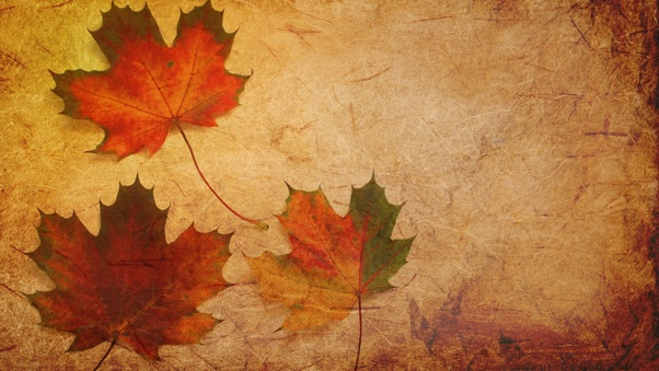 maple-leaves-texture-background-ta.jpg