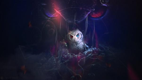 owl-8k-e5.jpg