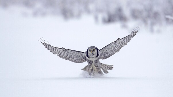 owl-in-snow.jpg