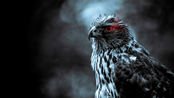 Red Eye Eagle 4k Hd Birds 4k Wallpapers Images