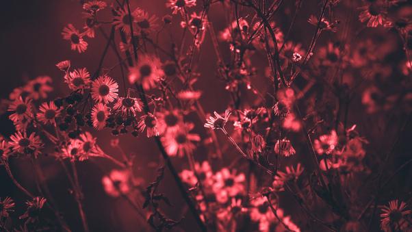 red-tree-flowers-5k-0w.jpg