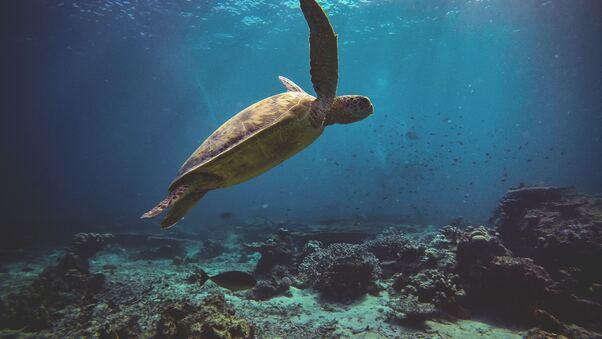 sea-turtle-4k-m5.jpg