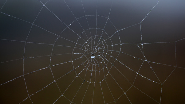 spider-web-water-drop-5k-b6.jpg