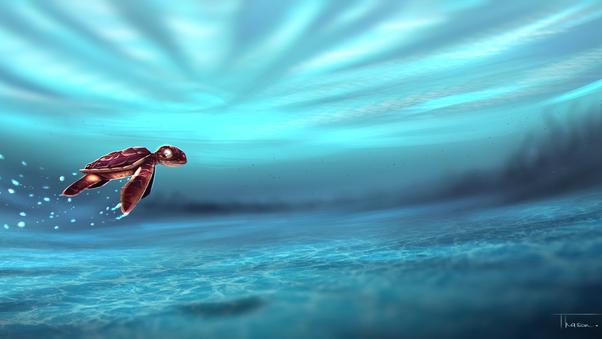 turtle-baby-in-water-artwork-5k-wk.jpg