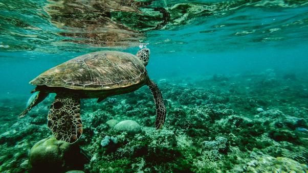turtle-underwater-yl.jpg