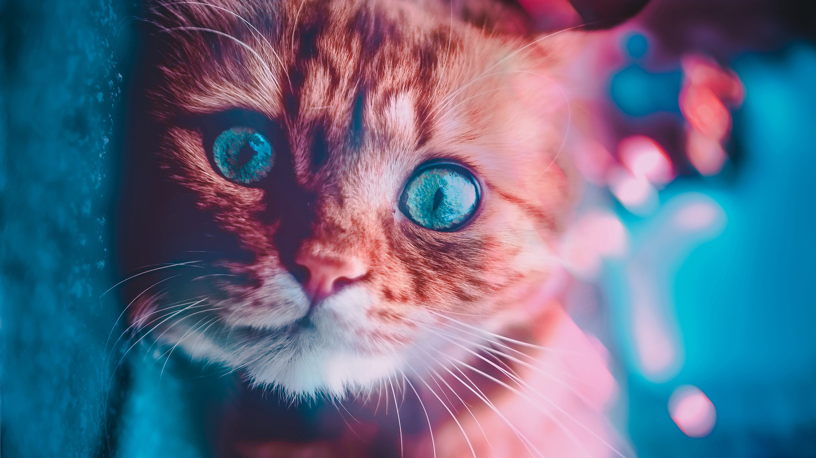 1920x1080 Cat Glowing Eyes Laptop Full Hd 1080p Hd 4k Wallpapers Images Backgrounds Photos And Pictures