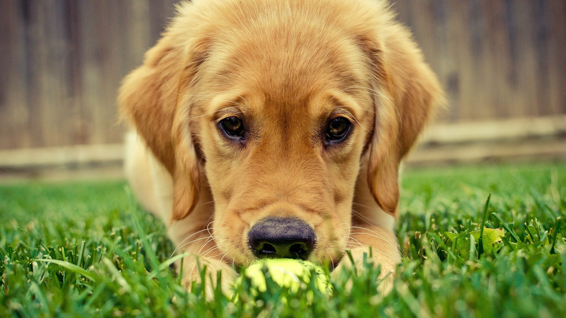 Cute Dog Hd Animals 4k Wallpapers Images Backgrounds Photos And Pictures