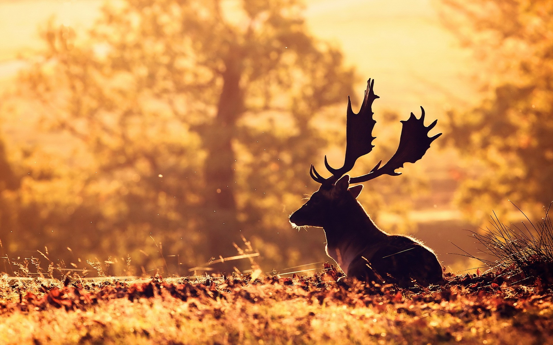 1360x768 Deer Laptop Hd Hd 4k Wallpapers Images Backgrounds Photos And Pictures