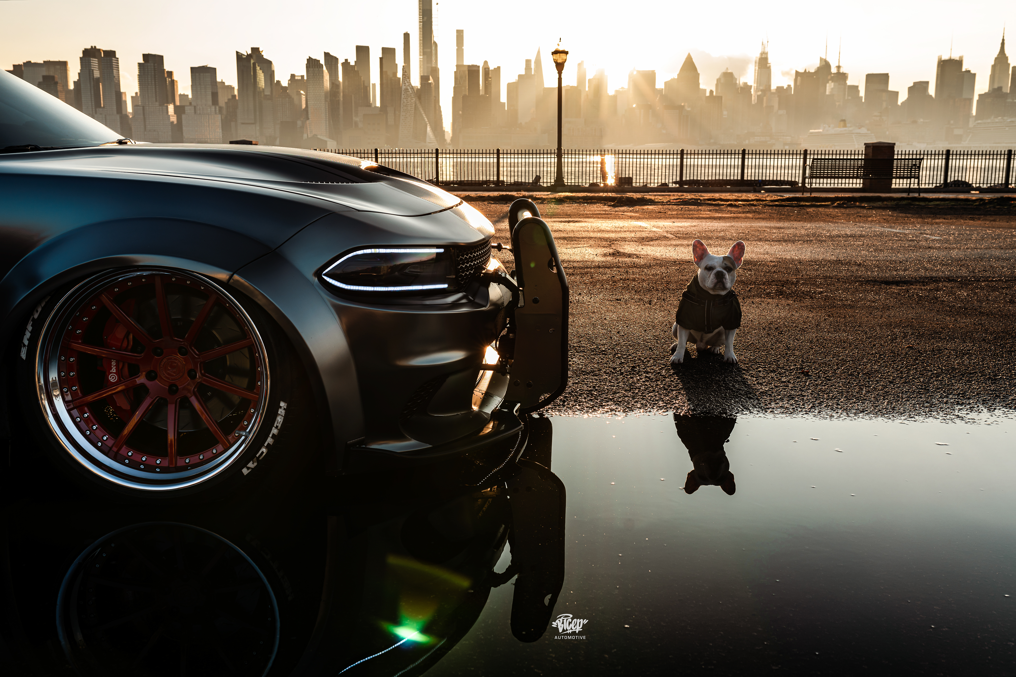 Dodge Charger Srt Hellcat With Dog Hd Cars 4k Wallpapers Images Backgrounds Photos And Pictures
