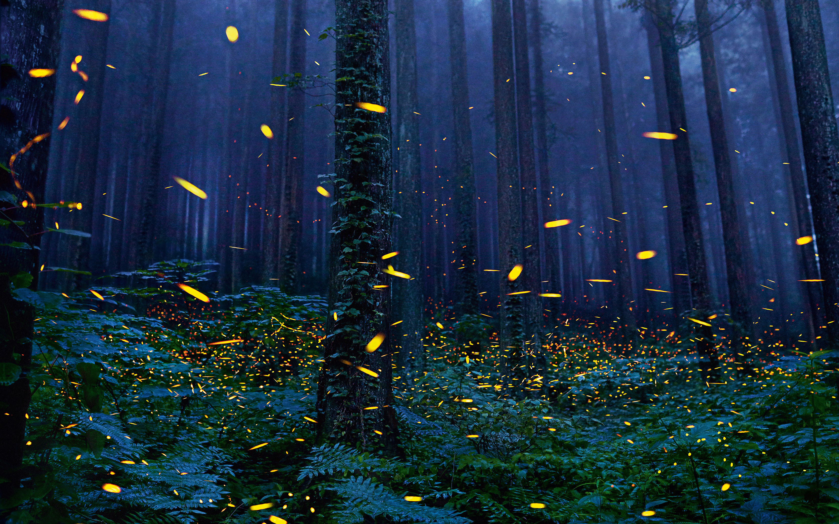 Fireflies Forest 4k Hd Nature 4k Wallpapers Images Backgrounds Photos And Pictures