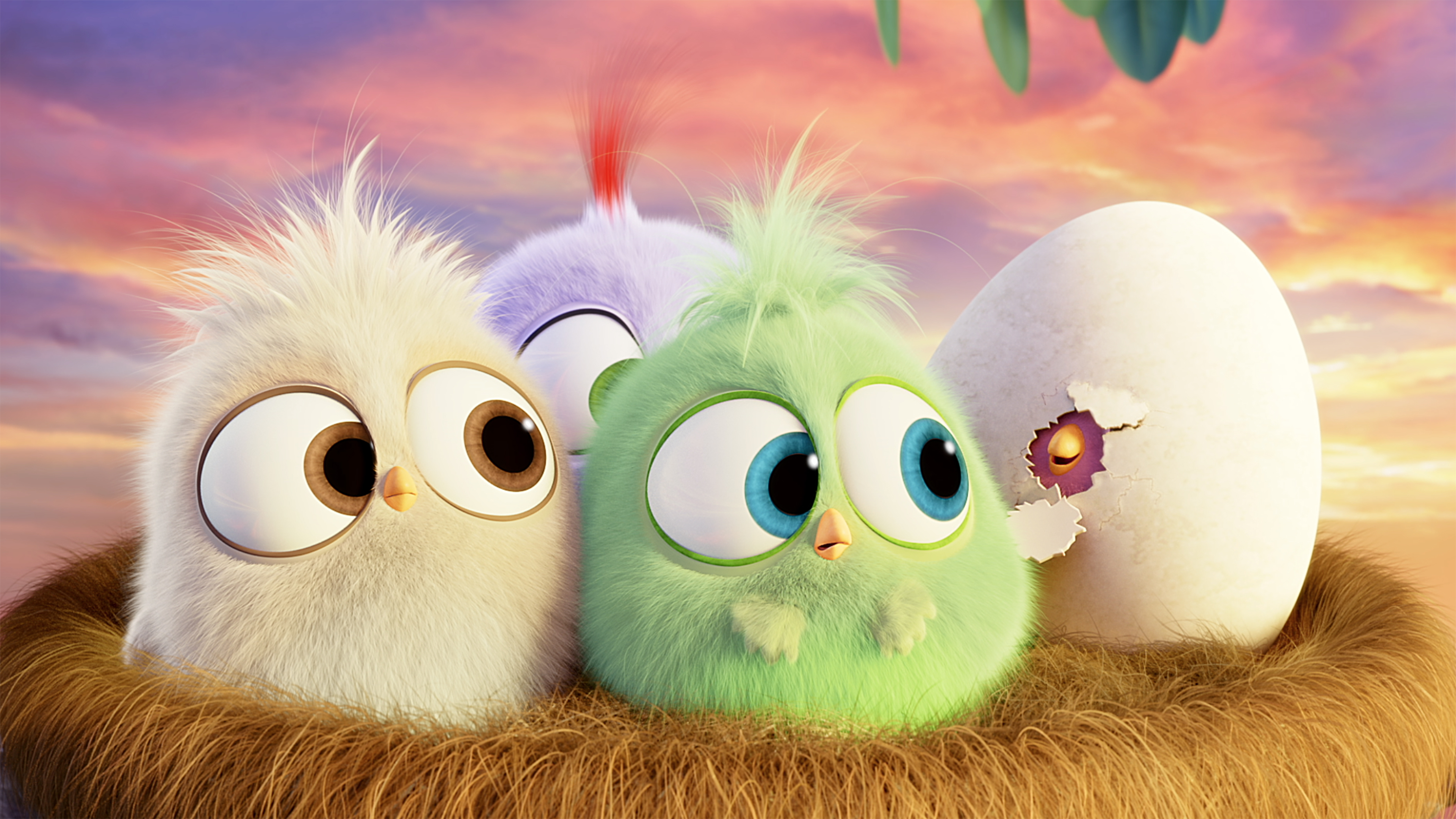 Hatchlings Angry Birds Hd Movies 4k Wallpapers Images Backgrounds Photos And Pictures