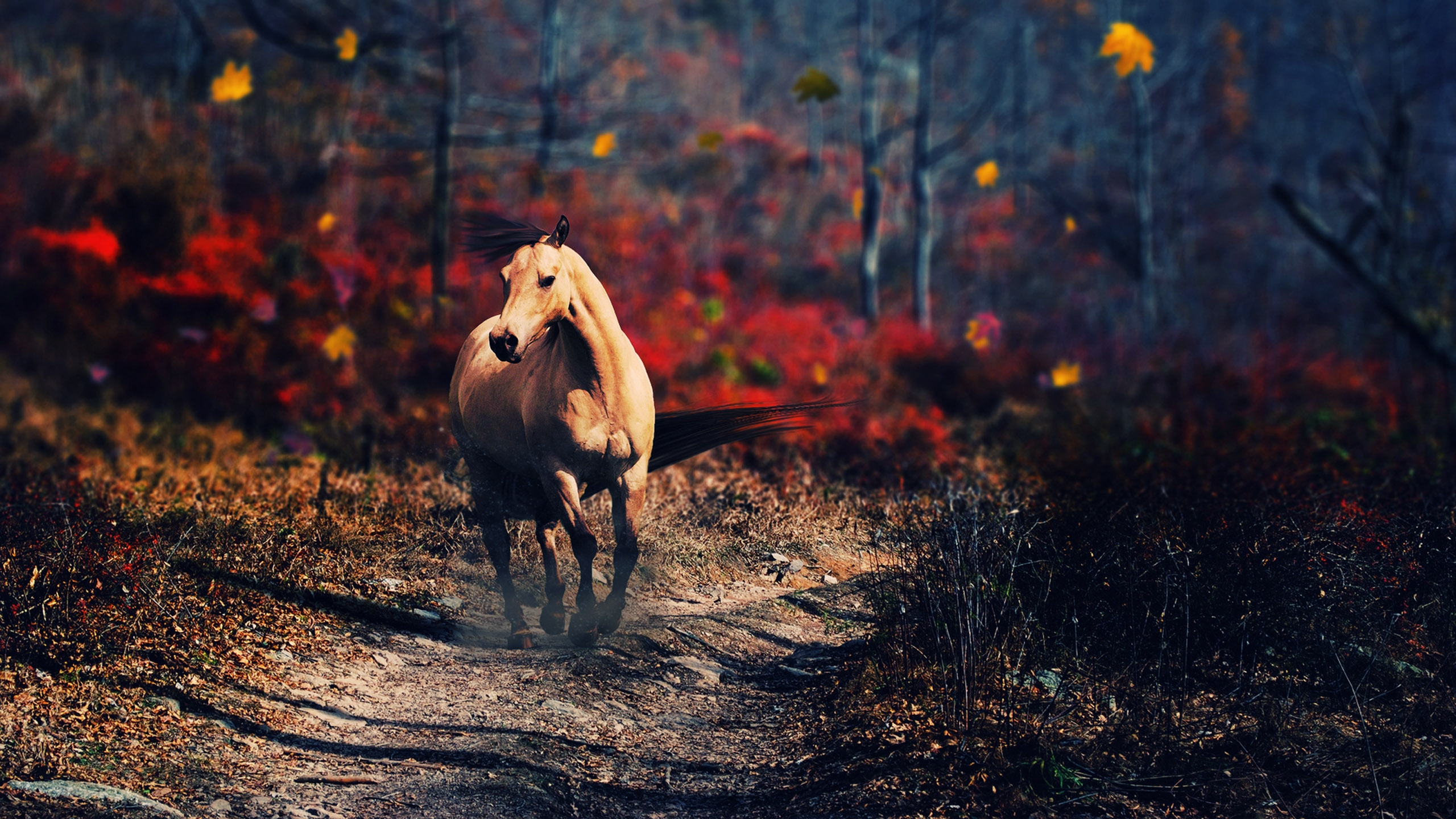1360x768 Horse New Laptop Hd Hd 4k Wallpapers Images Backgrounds Photos And Pictures