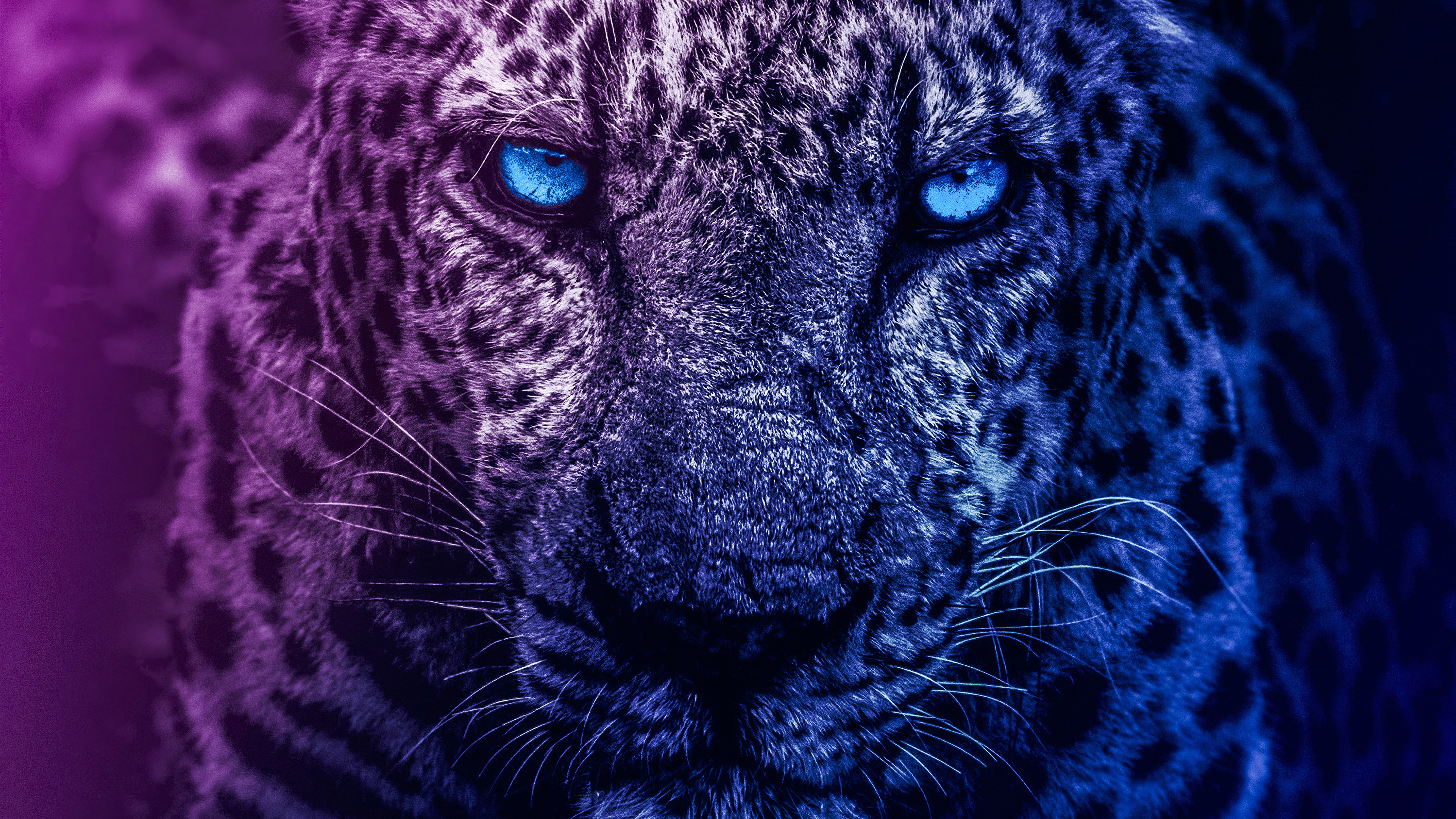 Lion Blue Eyes Hd Animals 4k Wallpapers Images Backgrounds Photos And Pictures
