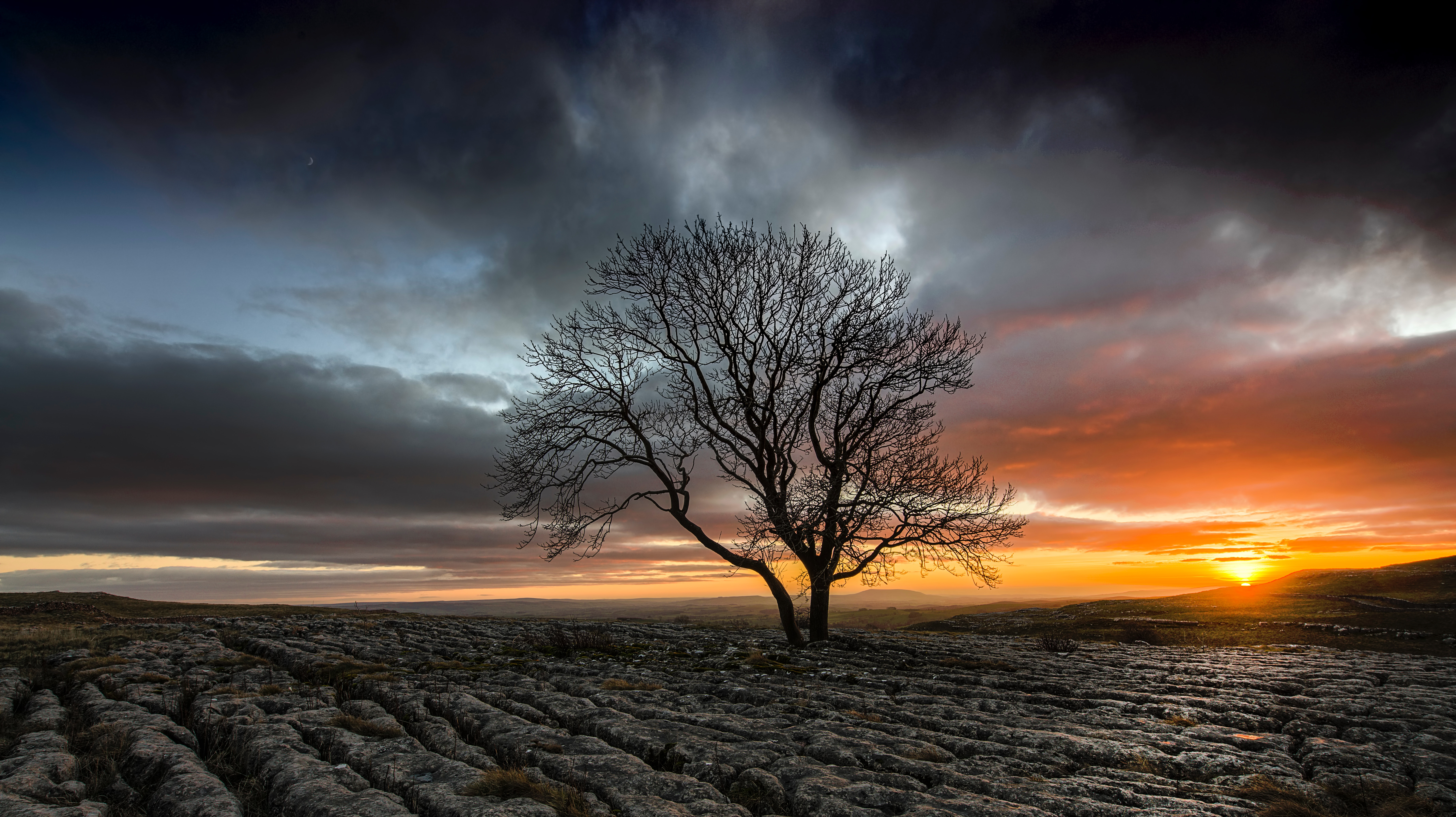 1920x1080 Lonely Tree In Drought Field